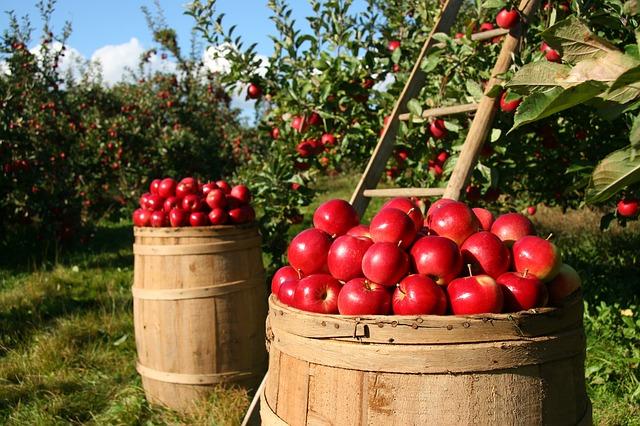 Hvilket eple heter