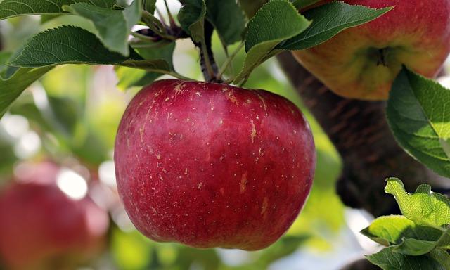 eplet kommer fra