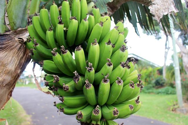 quiz bananer