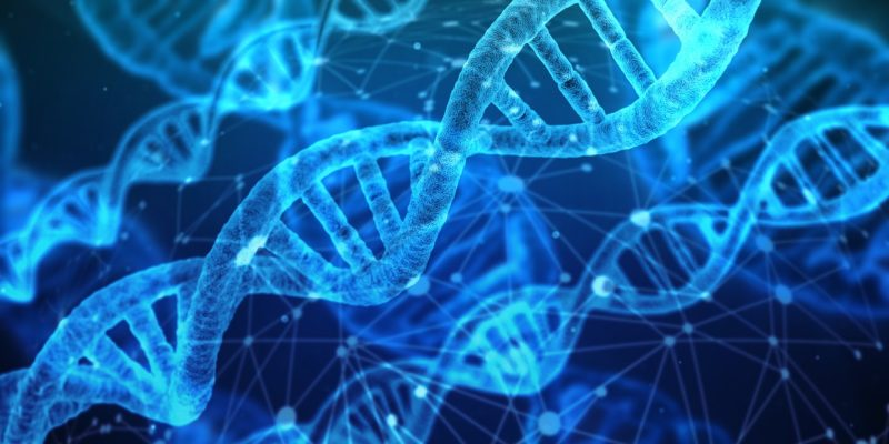 genmodifisert mat